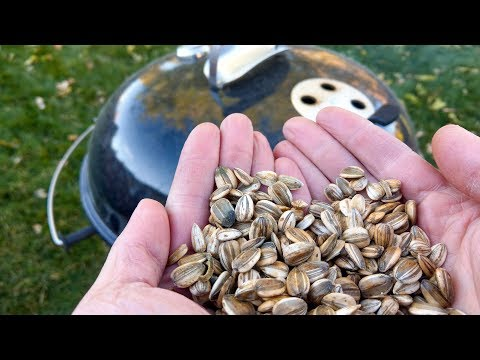 How to Harvest and Make Smoke Roasted Sunflower Seeds