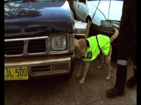 Termite Drug and Security Dogs
