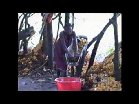 How to make cashew wine.Guinea-Bissau | Comment faire le vin de cajou |Как делают вино из кешью.
