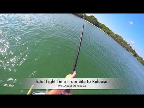 Shark Fishing Marco Island, FL  - October 2013