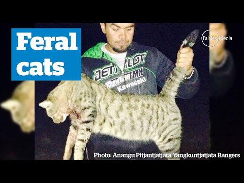 Feral cat cull in Australia