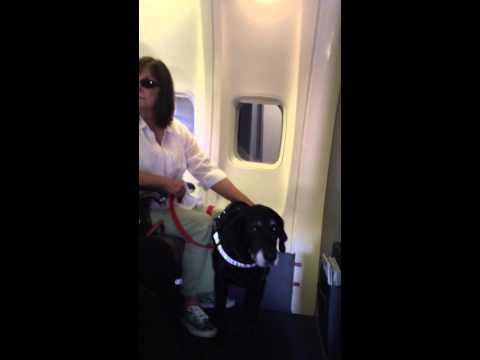 Southwest Airlines Service Dog