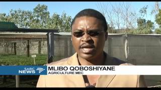 E Cape govt, Fort Hare Univ form partnership to train unemployed youth