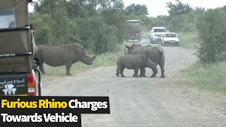 Furious rhino charges towards vehicle on South Africa safari