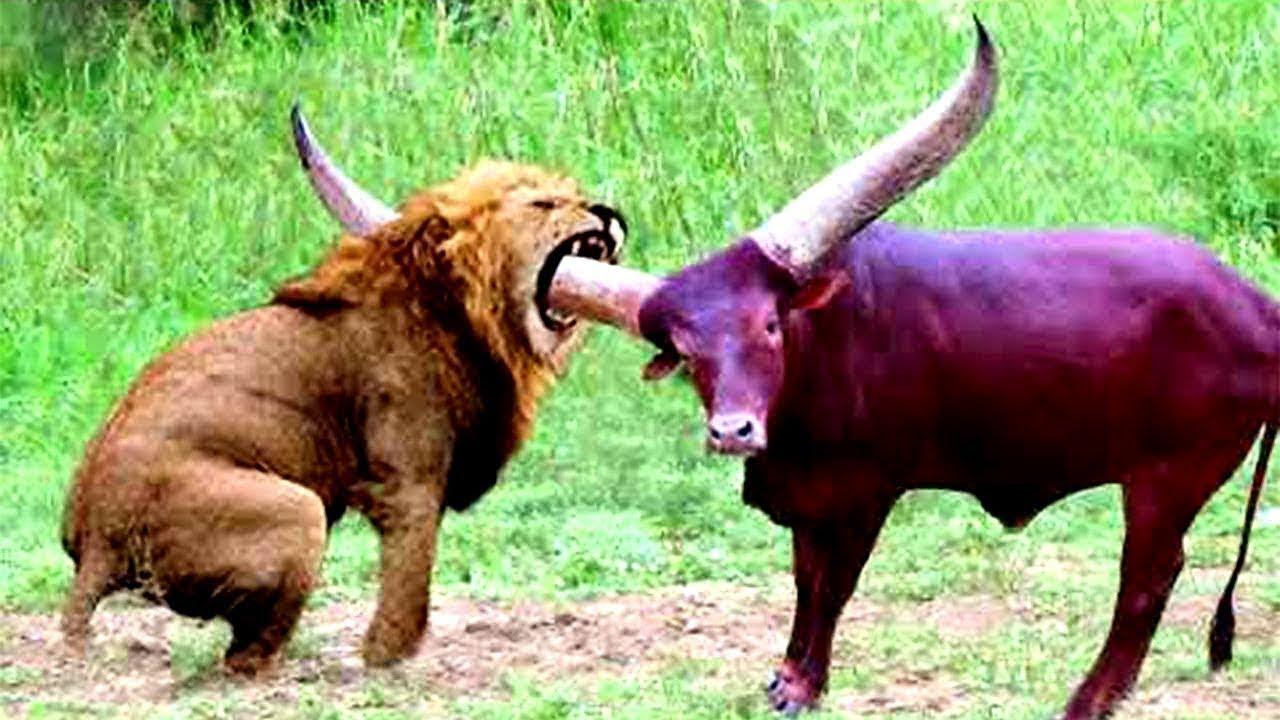 20 TIMES ANIMALS MESSED WITH THE WRONG OPPONENT!