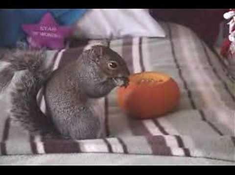 Sammy the Squirrel's Pumpkin