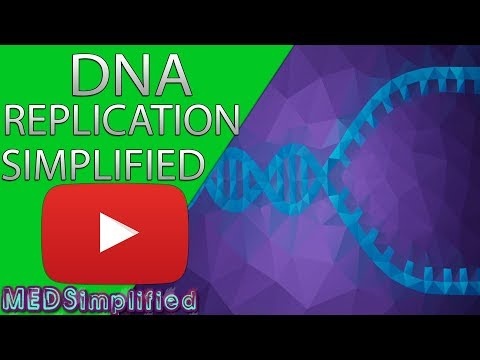 Dna Replication Part 2
