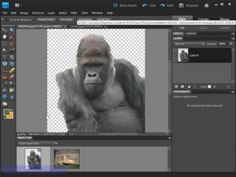 Copy, Paste & Move in Photoshop Elements 9