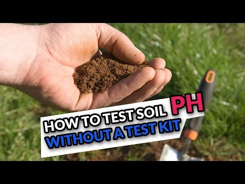 DIY Soil pH Test: How To Test Soil Acidity/Alkalinity without a Test Kit