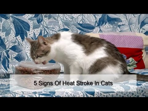 5 Signs Of Heat Stroke In Cats