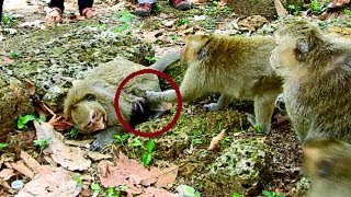 terrify!! billion breakheart cos newborn& mum, One team fight poor Dana cruel,Mum protect baby