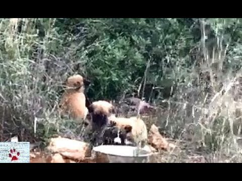 Puppies abandoned in the middle of nowhere get a second chance in life