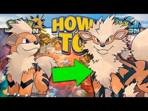 HOW TO Evolve Growlithe into Arcanine in Pokemon Ultra Sun and Moon