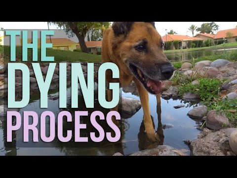 The Dying Process: Letting Your Pet Die Naturally