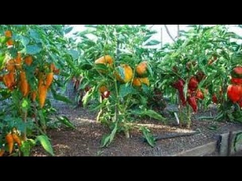 Important Work/Life lessons we can all learn from gardening - Top 10 list