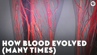 How Blood Evolved (Many Times)