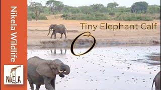 Did the herd reject this baby elephant?