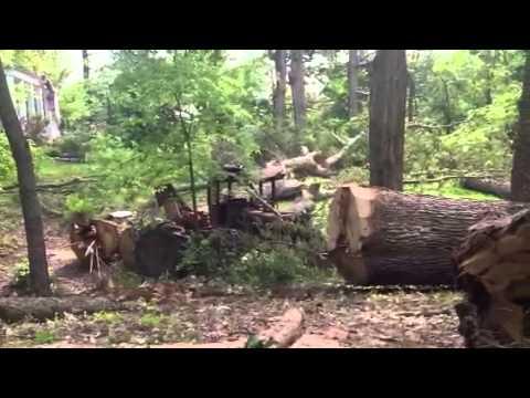 Huge white oak log