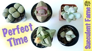 When And When Not To Repot Your Succulents (timing Is Important)