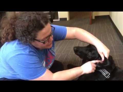 Emily explaining dog ear cleaning