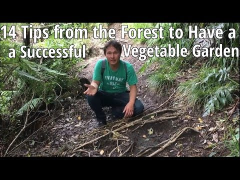 14 Tips from the Forest to Have a Successful Vegetable Garden