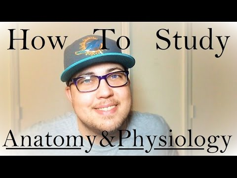 How To Study Anatomy and Physiology (3 Steps to Straight As)