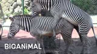 Download Amazing animal. Mystery of life Video