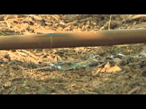 Retrofitting Your Sprinkler System to a Drip Irrigation System