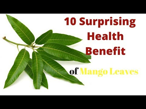 10 Surprizing Health Benefit of Mango Leaves That's Will Amaze You!