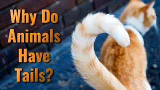 Why Do Animals Have Tails?