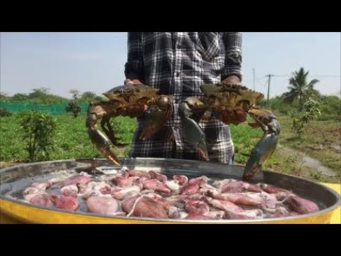 Big Crabs Stuffed Squids - Cooking Big Crabs with Small Squids -Tasty Non-Veg Gravy