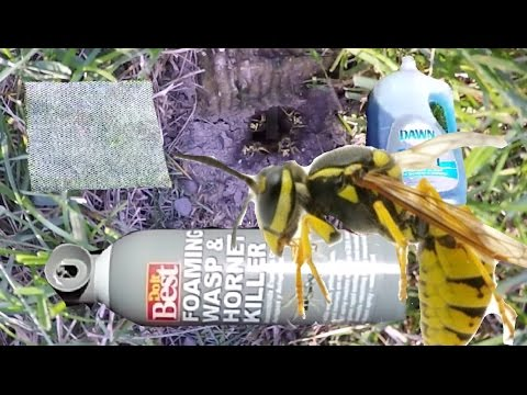 2 Ways To Kill A In Ground Bees Nest / How to KILL Ground Wasp and Yellow Jackets
