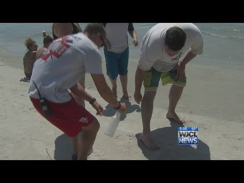 Lifeguards treat hundreds of jellyfish stings