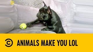 🔴 Hilarious Animal Fails | Comedy Central UK