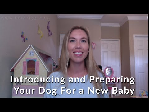 introducing and preparing your dog for a new baby