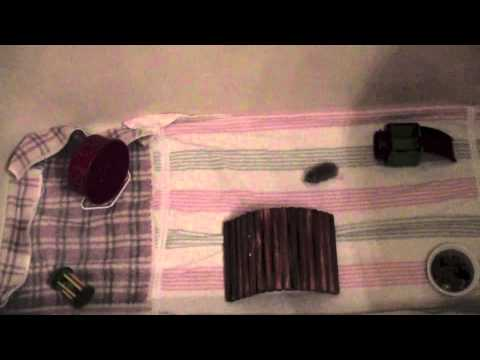 How to Entertain A Roborovski Hamster
