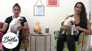 Birdie, The Frenchies and poop: A hilariously NASTY story!