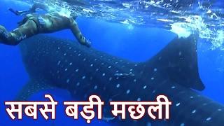 दुनिया की सबसे बड़ी मछली || Biggest Fish in the World  ( whale shark ) in Hindi