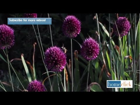 Five Flowers That Attract Bees