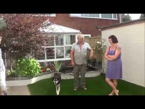 Artificial Grass in a Small Contemporary Garden