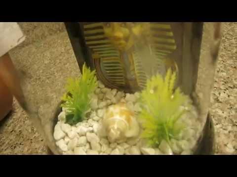 Update#1 New Betta Fish