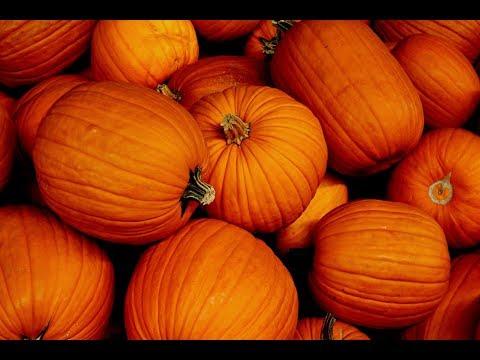 Homemade Pumpkin Pie Filling Recipe From Scratch 👌😀🍴☕