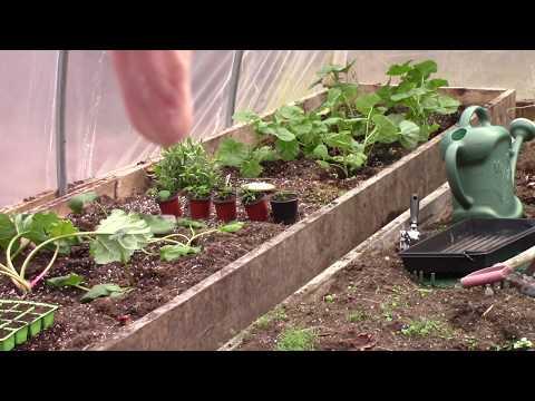 Grow Room, Gardens, Hoop House & Ruth Stout