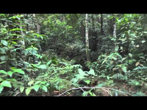Rio de Janeiro - Tijuca Rainforest Walk
