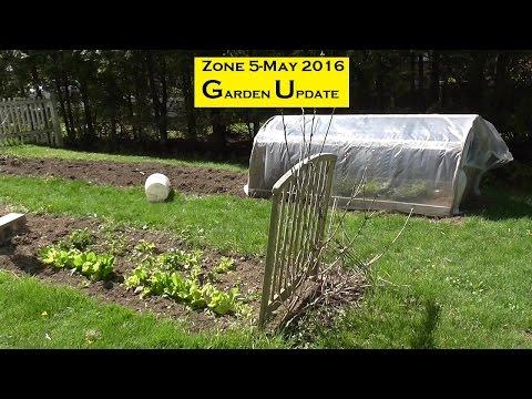 Zone 5 May 2016 Garden Update-Upstate New York