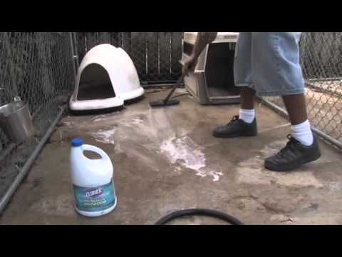 Ways to Clean your Dog Kennel | Dog's Health