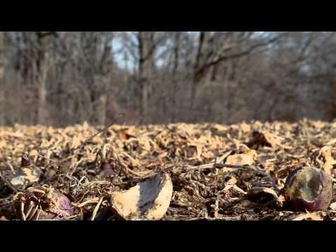 Illinois Turn-Key Hunting/Recreational Retreat