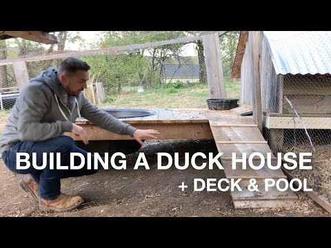 🔨  Building a Duck House w/Deck & Pool On The Farm (coop, pen, run)