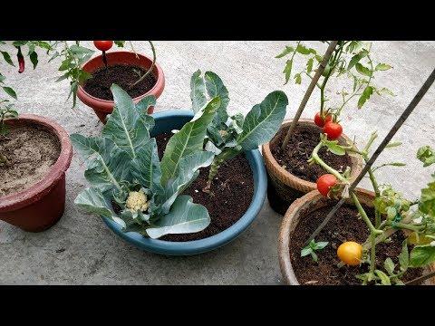 गमलों में आसानी से उगाई जाने वाली सब्ज़ियां
