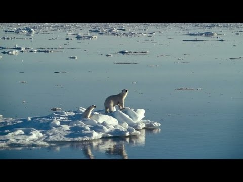 New Movie Boosts Campaign to Save Polar Bears